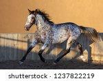 beautiful rare unique color...   Shutterstock . vector #1237822219