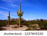 the sonora desert in central... | Shutterstock . vector #1237845220