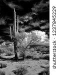 the sonora desert in central... | Shutterstock . vector #1237845229