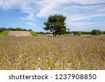 hitachi seaside park is a...   Shutterstock . vector #1237908850