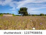 hitachi seaside park is a...   Shutterstock . vector #1237908856