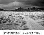 dirt road sonora desert in... | Shutterstock . vector #1237957483