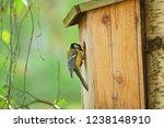 Eurasian Blue Tit With Birdhouse