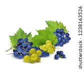 fresh  nutritious  tasty grapes.... | Shutterstock .eps vector #1238163526