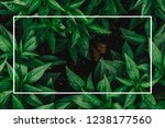 creative layout made of flowers ... | Shutterstock . vector #1238177560
