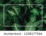creative layout made of flowers ... | Shutterstock . vector #1238177566