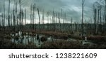 panoramic view of a misty swamp ... | Shutterstock . vector #1238221609