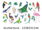 collection of beautiful... | Shutterstock . vector #1238231146