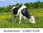 cow on a summer pasture | Shutterstock . vector #1238271190
