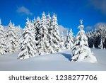 idyllic winter landscape of fir ...   Shutterstock . vector #1238277706
