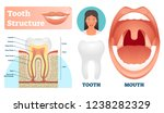tooth structure vector... | Shutterstock .eps vector #1238282329