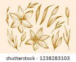 hand drawn lilies flowers... | Shutterstock .eps vector #1238283103