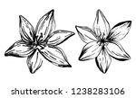 hand drawn lilies flowers... | Shutterstock .eps vector #1238283106