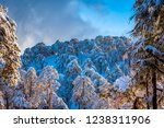 snow covered pine forest at... | Shutterstock . vector #1238311906