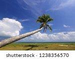 beautiful coconut tree on... | Shutterstock . vector #1238356570