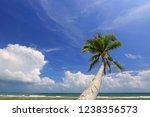beautiful coconut tree on... | Shutterstock . vector #1238356573