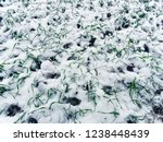 first snow on the field.   Shutterstock . vector #1238448439