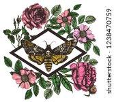death's head hawk moth and... | Shutterstock .eps vector #1238470759