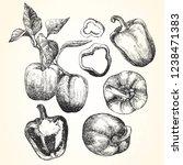 hand drawn illustration of... | Shutterstock .eps vector #1238471383