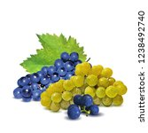 fresh  nutritious  tasty grapes.... | Shutterstock .eps vector #1238492740