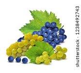 fresh  nutritious  tasty grapes.... | Shutterstock .eps vector #1238492743
