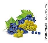 fresh  nutritious  tasty grapes.... | Shutterstock .eps vector #1238492749
