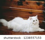 Stock photo a fluffy white cat laying on a wood floor against an antique wood trunk 1238557153