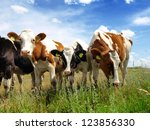 calves on the field | Shutterstock . vector #123856330