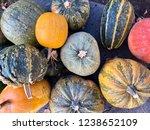 harvest of pumpkins at the floor | Shutterstock . vector #1238652109