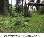 broken tree in the deep of the...   Shutterstock . vector #1238677270