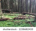 broken trees in the wild forest   Shutterstock . vector #1238682433