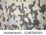 Textured Bark Of Platanus X...
