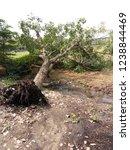 fallen tree  tree fell down... | Shutterstock . vector #1238844469
