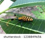 common turf bearing longhorn on ...   Shutterstock . vector #1238849656