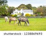 Horses Grazing Close To Kilbeg...