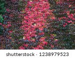 autumn red leaves on the fence... | Shutterstock . vector #1238979523