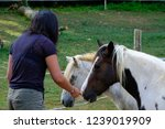 young woman strokes a pony over ... | Shutterstock . vector #1239019909