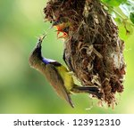 sun bird feeding new born chicks | Shutterstock . vector #123912310