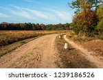 curved sand path in the dutch... | Shutterstock . vector #1239186526