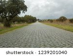 cobble stone road in rural...   Shutterstock . vector #1239201040