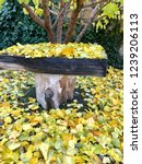 wooden bench at the autumn... | Shutterstock . vector #1239206113