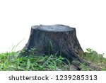Stump Grass Isolated On White...