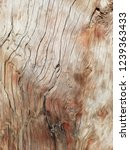 part of a tree trunk without...   Shutterstock . vector #1239363433