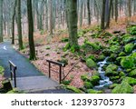 famous spa resort marianske... | Shutterstock . vector #1239370573