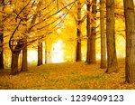 ginkgo biloba grove | Shutterstock . vector #1239409123