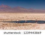laguna chaxa  atacama desert ... | Shutterstock . vector #1239443869