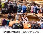new dehli  india   february 19  ... | Shutterstock . vector #1239447649