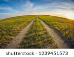 landscape dirt road in a sowing ... | Shutterstock . vector #1239451573