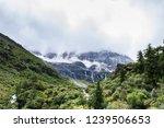 scene in daocheng yading... | Shutterstock . vector #1239506653
