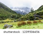 scene in daocheng yading... | Shutterstock . vector #1239506656